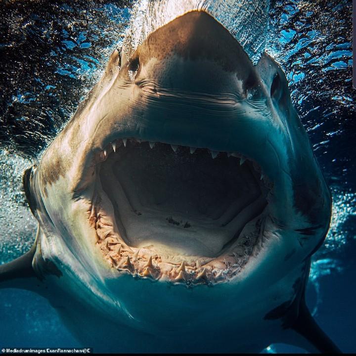 SharkTankEnt.